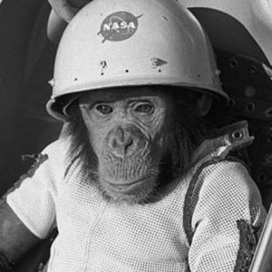 Remembering Ham, the Astrochimp